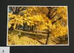 Barevný podzim_2